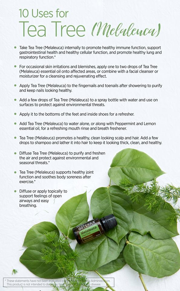 10 Uses for Melaleuca.jpg