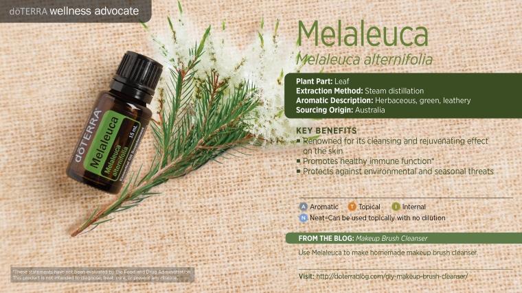 doTerra_Melaleuca.jpg