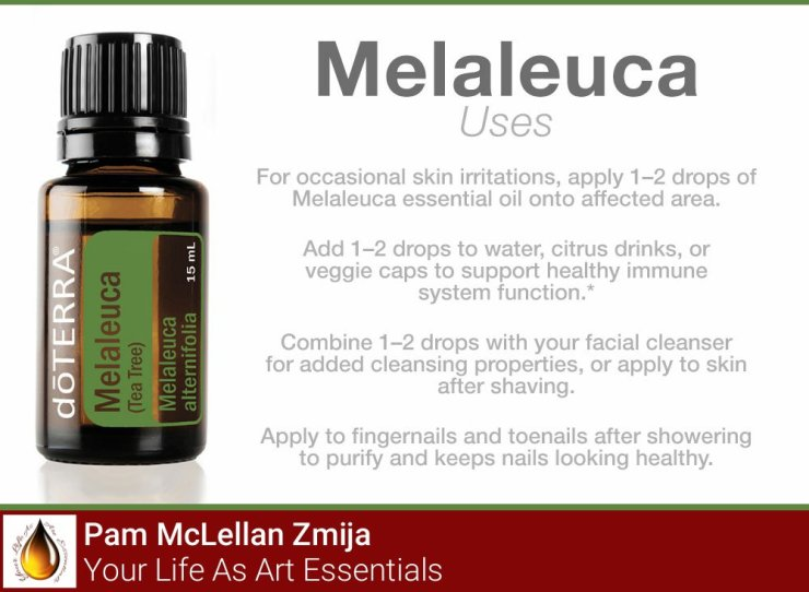 Oregano and Tea Tree / Melaleuca Essential Oils – Your Life As Art